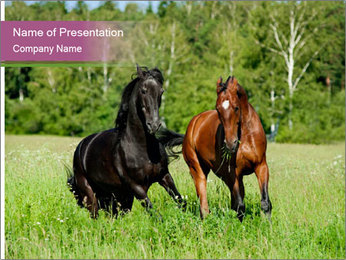 Horses PowerPoint Template - Slide 1
