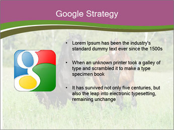 Horses PowerPoint Template - Slide 10
