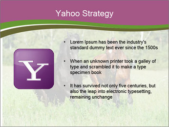 Horses PowerPoint Template - Slide 11