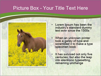 Horses PowerPoint Template - Slide 13