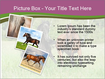 Horses PowerPoint Template - Slide 17