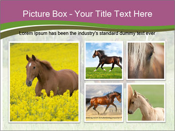Horses PowerPoint Template - Slide 19