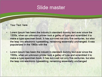 Horses PowerPoint Template - Slide 2