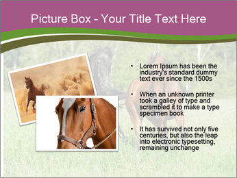 Horses PowerPoint Template - Slide 20