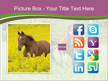 Horses PowerPoint Template - Slide 21