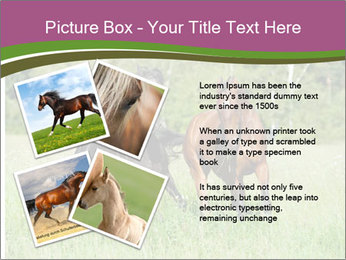 Horses PowerPoint Template - Slide 23
