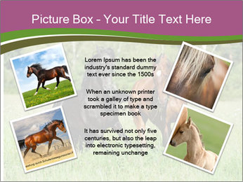 Horses PowerPoint Template - Slide 24