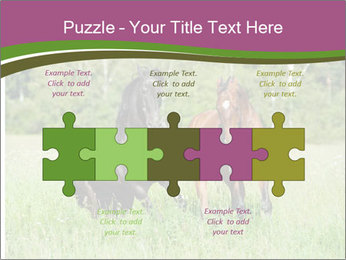 Horses PowerPoint Template - Slide 41