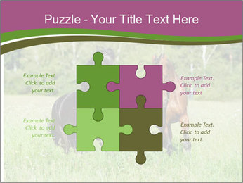 Horses PowerPoint Template - Slide 43