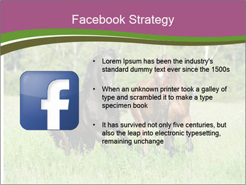 Horses PowerPoint Template - Slide 6