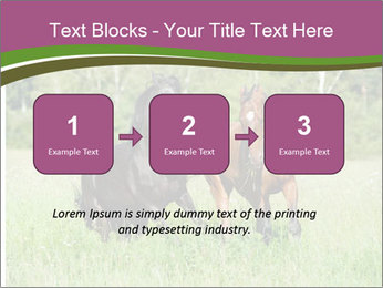 Horses PowerPoint Template - Slide 71