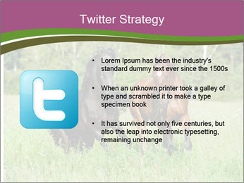 Horses PowerPoint Template - Slide 9