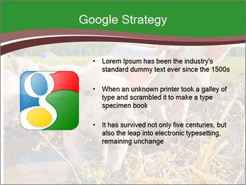 Pigs PowerPoint Templates - Slide 10