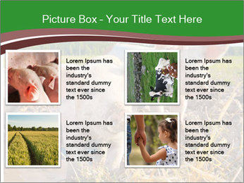 Pigs PowerPoint Template - Slide 14