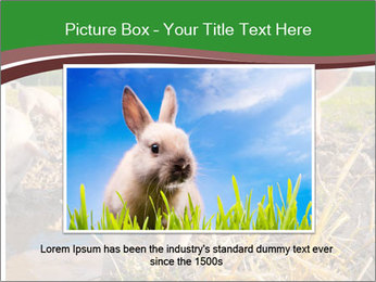 Pigs PowerPoint Template - Slide 16