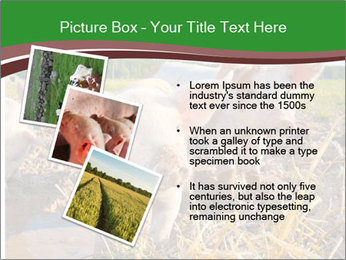 Pigs PowerPoint Templates - Slide 17
