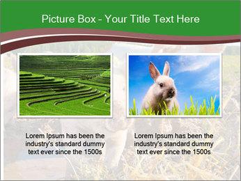 Pigs PowerPoint Templates - Slide 18