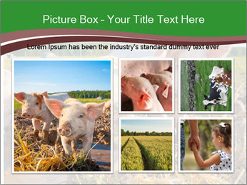 Pigs PowerPoint Template - Slide 19