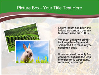 Pigs PowerPoint Template - Slide 20