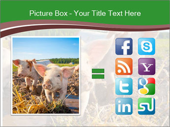 Pigs PowerPoint Template - Slide 21