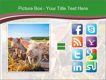 Pigs PowerPoint Templates - Slide 21