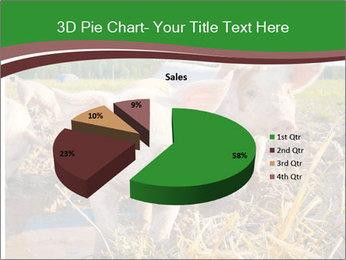 Pigs PowerPoint Templates - Slide 35