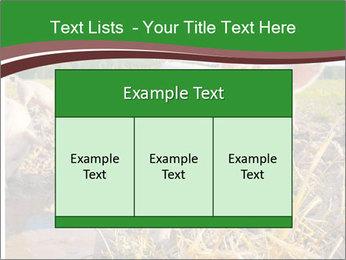 Pigs PowerPoint Templates - Slide 59