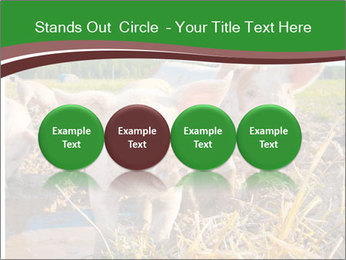 Pigs PowerPoint Template - Slide 76