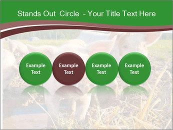 Pigs PowerPoint Templates - Slide 76