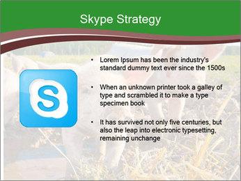 Pigs PowerPoint Templates - Slide 8