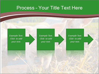 Pigs PowerPoint Template - Slide 88