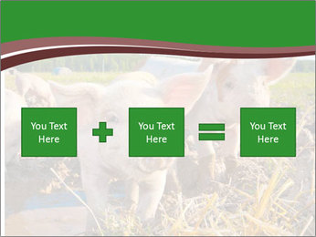 Pigs PowerPoint Template - Slide 95