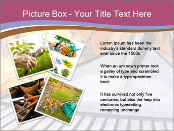 Autumn leaves PowerPoint Template - Slide 23