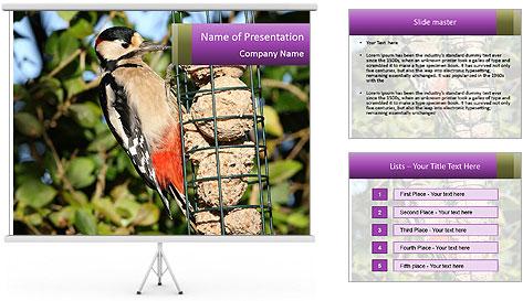 Bird feeders PowerPoint Template