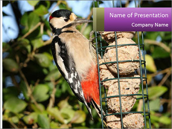 Bird feeders PowerPoint Template