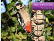 Bird feeders PowerPoint Templates