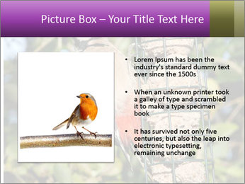 Bird feeders PowerPoint Templates - Slide 13