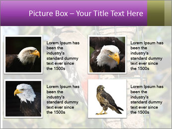 Bird feeders PowerPoint Templates - Slide 14