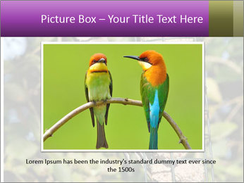 Bird feeders PowerPoint Templates - Slide 15