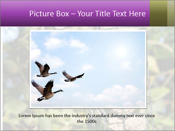 Bird feeders PowerPoint Templates - Slide 16