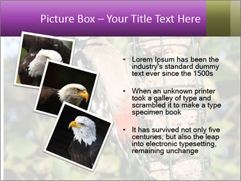 Bird feeders PowerPoint Templates - Slide 17