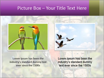 Bird feeders PowerPoint Templates - Slide 18