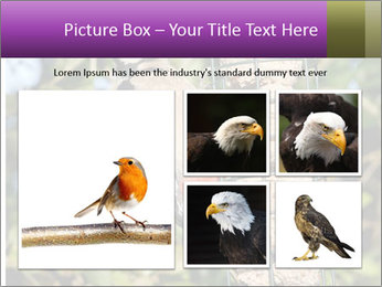 Bird feeders PowerPoint Templates - Slide 19