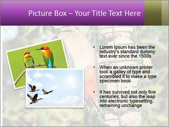 Bird feeders PowerPoint Templates - Slide 20