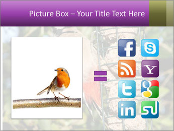 Bird feeders PowerPoint Templates - Slide 21