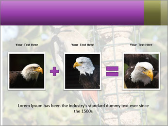 Bird feeders PowerPoint Templates - Slide 22
