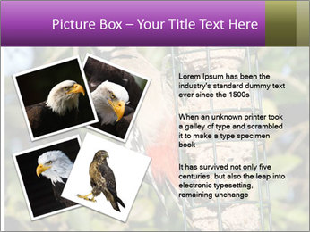 Bird feeders PowerPoint Templates - Slide 23