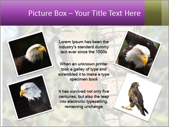 Bird feeders PowerPoint Templates - Slide 24
