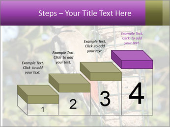 Bird feeders PowerPoint Templates - Slide 64