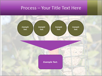Bird feeders PowerPoint Templates - Slide 93